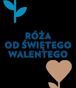 roza_od_sw_walentego_2